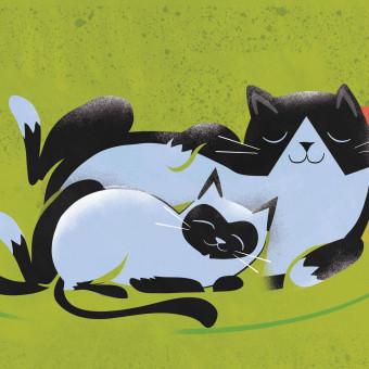 opposite_cats
